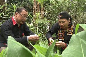'Thần y' sở hữu hơn 500 thảo dược quý, cứu sống hàng ngàn người bị xương khớp