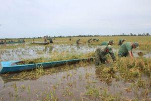 Nước lũ đe dọa hơn 40.000ha lúa ở Kiên Giang