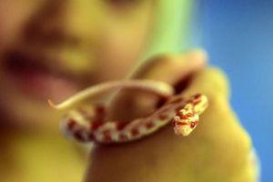 Rùng mình ngắm bộ sưu tập rắn khủng của chàng trai 8X Hà Nội