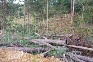 Đình chỉ một Phó Chủ tịch xã vì liên quan chuyện phá rừng