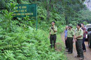 Thái Nguyên: Thả hai cá thể Yểng về rừng tự nhiên