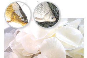 Cách ăn vảy cá điều trị bệnh mà nhiều người chưa biết