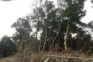 Bắc Giang: Hình phạt thích đáng cho những 'kẻ' phá rừng