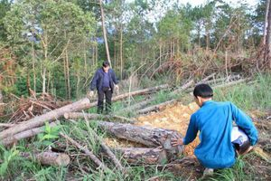 Đình chỉ Phó Chủ tịch xã vì liên quan chuyện phá rừng ở Lâm Đồng