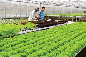 Liên kết trong tiêu thụ nông sản: Giúp nền nông nghiệp phát triển bền vững