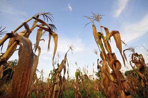 Phát triển bền vững, ứng phó với biến đổi khí hậu