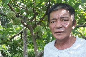 Trồng cây ra quả biết mở mắt, lão nông U60 thu 700 triệu mỗi năm