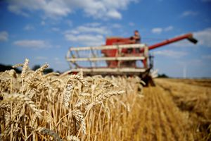 Trái đất nóng lên, côn trùng ăn cây trồng nhiều hơn
