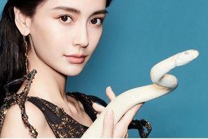 Rũ bỏ hình ảnh yêu kiều dịu dàng, Angelababy ấn tượng với bộ ảnh thời trang với rắn trên tạp chí
