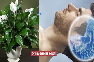 Khó ngủ hay mất ngủ hãy trồng 10 loại cây này trong phòng