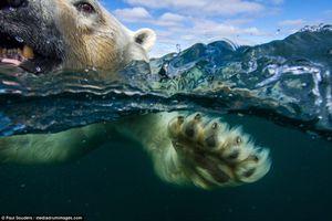 Nhiếp ảnh gia một mình chụp gấu trắng Bắc cực chỉ với thuyền đánh cá