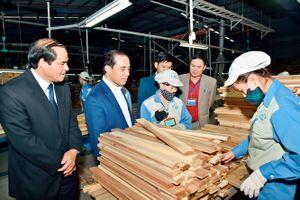 Tuyên Quang: Tốp đầu cả nước về tỷ lệ che phủ rừng