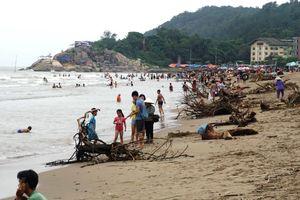Bãi biển Sầm Sơn ngập rác thải, gốc cây nặng hàng tấn