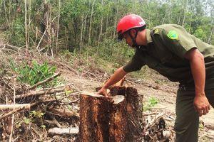 Xin tận thu lâm sản để phá rừng liên tiếp xảy ra tại Đăk Nông, Đăk Lăk
