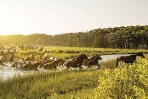 Lễ hội ngựa độc đáo trên đảo