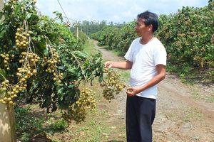 Sơn La sớm trở thành thủ phủ cây ăn quả