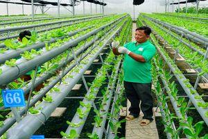 Cận cảnh: Gặp những 'siêu' nông dân thu nhập tiền tỷ đất Kiên Giang