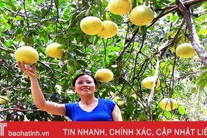 Xã miền núi Hương Khê ước thu 22 tỷ đồng từ bưởi Phúc Trạch