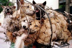 Chủ quán giết hơn 40 con chó ngày 2.9 hé lộ sự thật bất ngờ