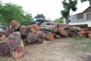 Khởi tố thêm một Hạt phó Hạt Kiểm lâm liên quan đến vụ trùm gỗ lậu Phượng 'râu'