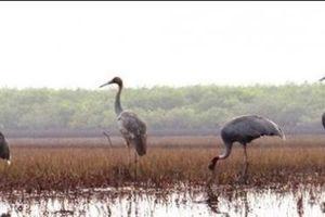 Kiên Giang: Huyện Hòn Đất tăng cường công tác quản lý, bảo vệ động vật hoang dã