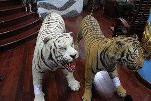 Bị bắt vì giữ 2 bộ da hổ nhồi bông trong nhà