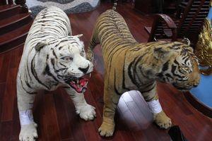 Khởi tố người đàn ông tàng trữ 2 bộ da hổ