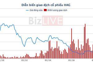 Tiếp tục duy trì diện cảnh báo đối với cổ phiếu Hoàng Anh Gia Lai