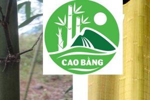 Chiếu trúc sào Cao Bằng được bảo hộ chỉ dẫn địa lý