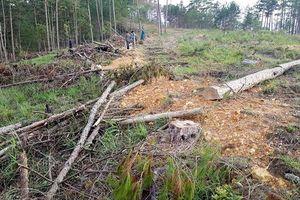 Lâm Đồng: Tạm đình chỉ công tác 2 cán bộ do để xảy ra phá rừng