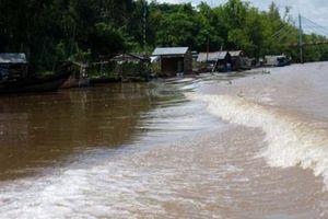 Sông Cửu Long: Cảnh báo mực nước sẽ tăng nhanh trong những ngày sắp tới