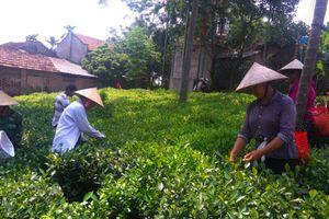 Hướng đến nền sản xuất nông nghiệp sạch