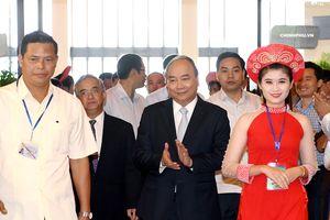 Thủ tướng dự Hội nghị về phát triển sâm Ngọc Linh