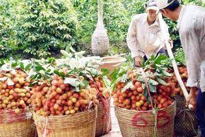 Thu nhập của nông dân tăng 3,22 lần nhờ nghị quyết tam nông