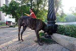 Chó thả rông không rọ mõm 'nghêng ngang' nhiều nơi đông người