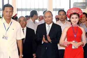 Thủ tướng: 'Sâm Ngọc Linh là quốc bảo của nước ta'