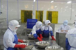 Cơ hội đẩy mạnh xuất khẩu tôm