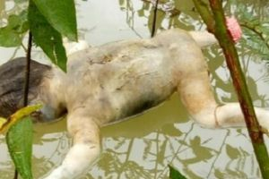 Phát hiện thi thể bé trai khoảng 2 tuổi đang phân hủy nổi trên sông