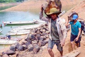 Cảnh lạ: Hồ 'mọc' gỗ, dân đổ xô xuống cắt, kiếm 300 ngàn/ngày