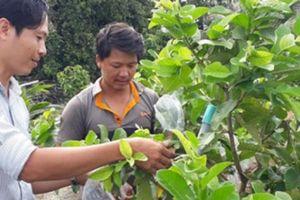 Vườn trồng cây ăn trái 'hái' đều vài trăm ngàn mỗi ngày