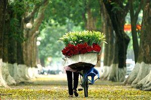 Mùa thu về trên những con đường đẹp nhất Hà Nội