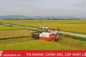 Thạch Hà chủ động thu hoạch lúa hè thu trước mùa mưa bão