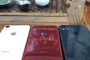Xuất hiện ảnh thực tế 3 màu cực hot của iPhone 9 'giá rẻ'