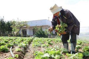 Khuyến khích các doanh nghiệp đầu tư vào nông nghiệp, nông thôn