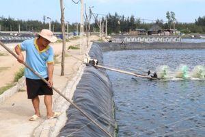 Agribank Quảng Xương: 'Bà đỡ' cho nhà nông làm giàu