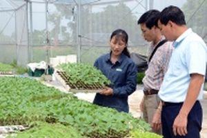 Chuyển dịch cơ cấu sản xuất nông nghiệp theo hướng công nghệ cao