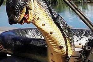 Sự thật ảnh 'rắn khổng lồ ăn thịt người' từng gây xôn xao MXH