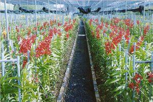 Thăm vựa lan lớn nhất nước trên vùng 'đất thép' Củ Chi