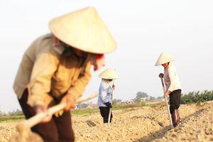 Thu nhập tăng nhưng nông dân vẫn cô đơn trên đồng ruộng