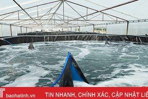 Doanh nghiệp nuôi tôm lớn nhất Hà Tĩnh đầu tư hơn 14 tỷ xây 'nhà' cho tôm